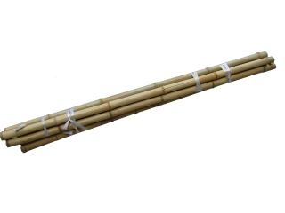 白竹 約200cm 新潟県、山形県除く