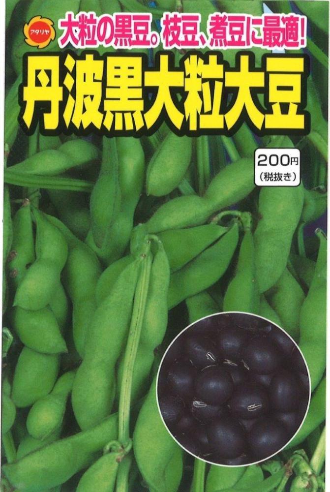 ダイズ 丹波黒大豆