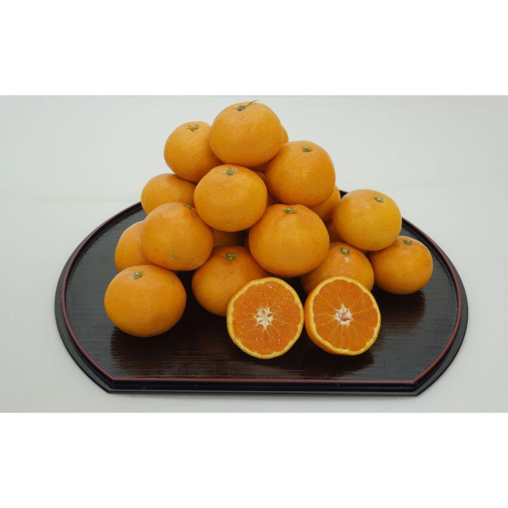 和歌山県産 木成り完熟みかん 約5.5kg(60~80玉入)