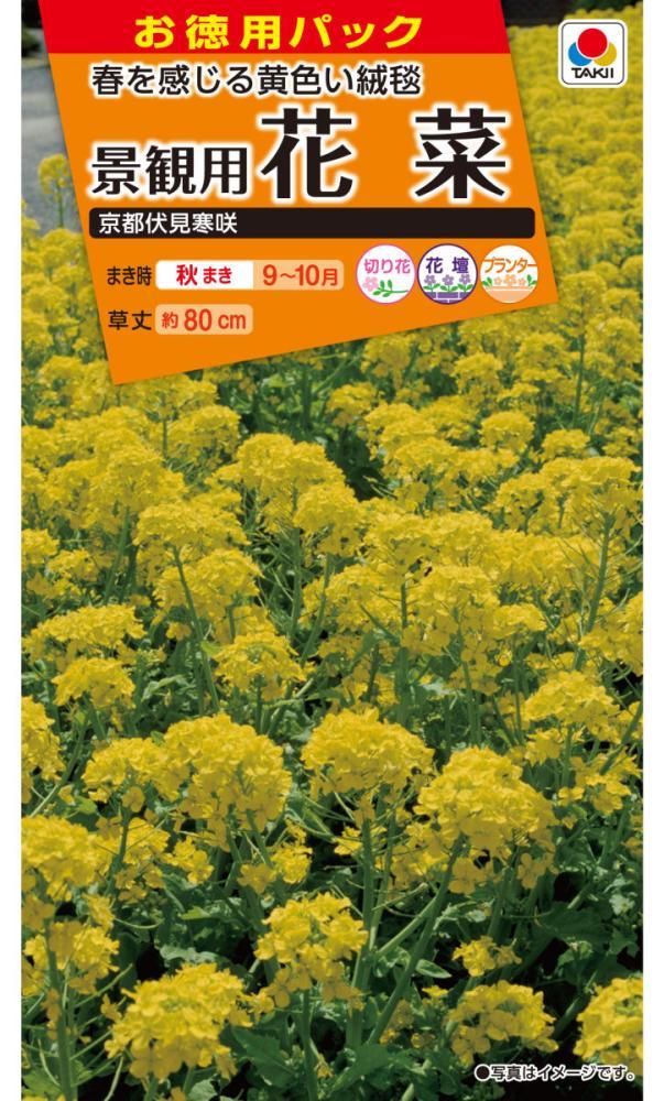 景観用花菜 徳用