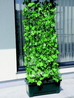 グリーンカーテンしゅうかく菜 700型 ダークグリーン
