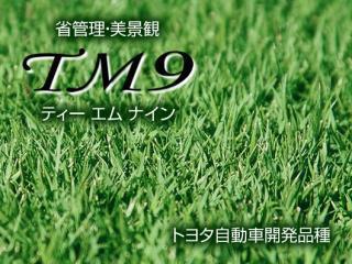 高麗芝 TM-9 1束(1平方メートル)9枚入り