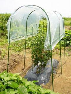 トマトの雨よけセット