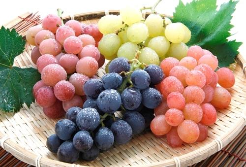 新潟県産 うさぎ村の葡萄畑 おまかせセット 家庭用 約1.7kg(6~7房入)
