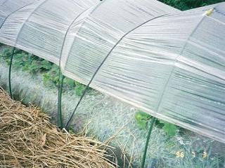 園芸トンネル支柱 5本セット 11Q×2.4A ST
