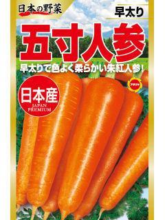 日本の野菜 五寸人参