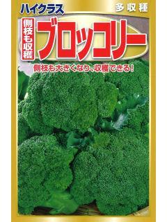 多収種 側枝も収穫ブロッコリー