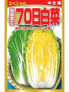 中生種 耐病黄芯70日白菜