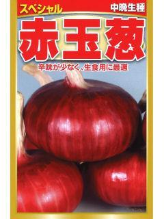 中晩生種 赤玉葱