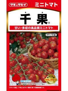 ミニトマト 千果