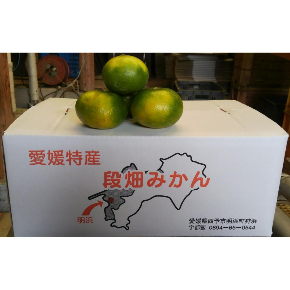 愛媛県産 みかんのトップバッター!ごく早生みかん 約5kg(60玉前後)