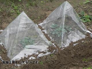 野菜苗キャップ用替えビニール 10枚