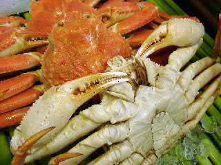 本ズワイ蟹3尾(総量1.5kg前後)