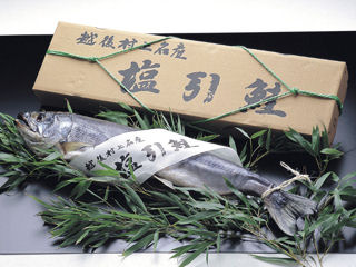 越後村上産塩引き鮭 特大 1尾(仕上り2.6kg前後)
