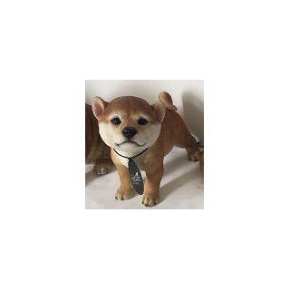 かわいい 秋田犬