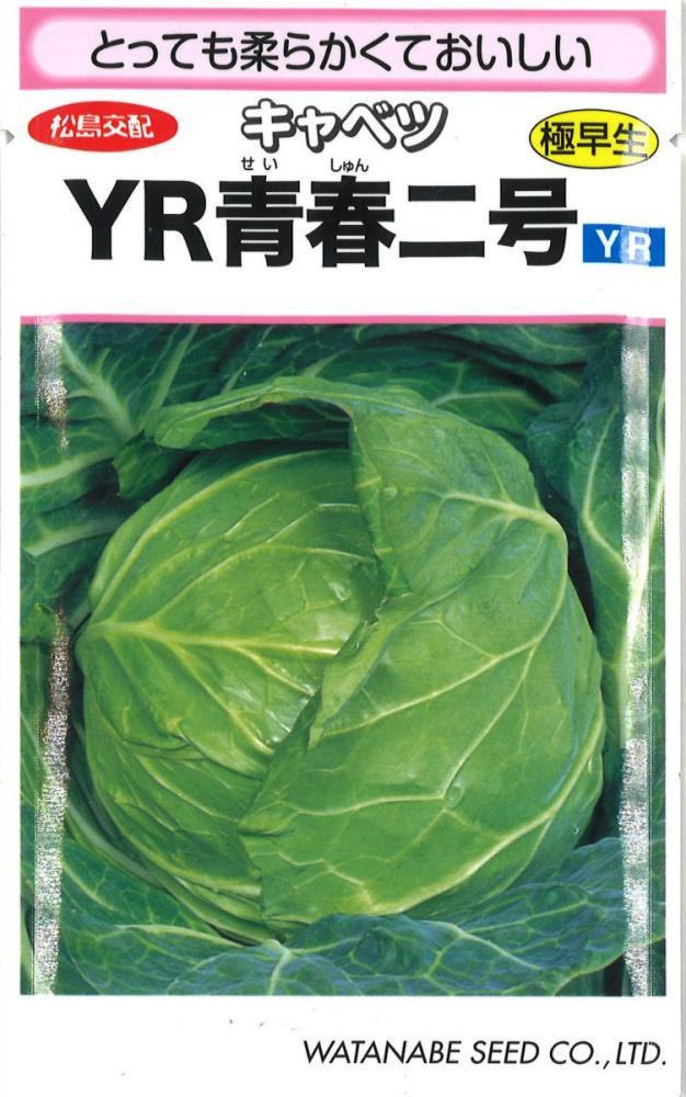 松島交配YR青春2号甘藍