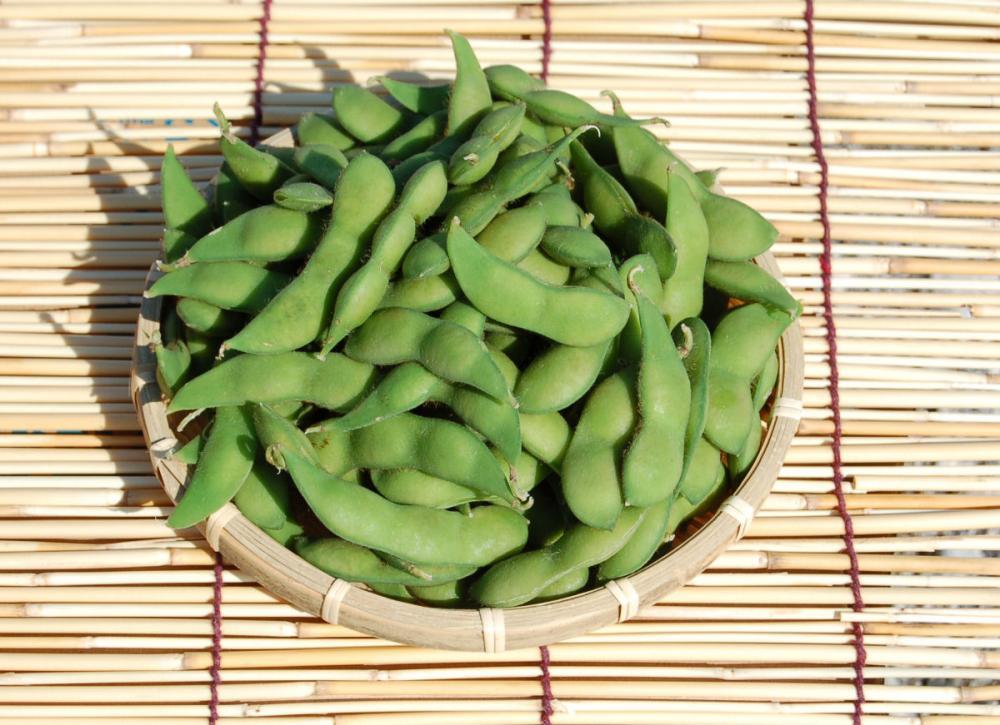 新潟県新潟市(黒埼地区)産 布川農園の枝豆 約1.5kg(300g×5袋)