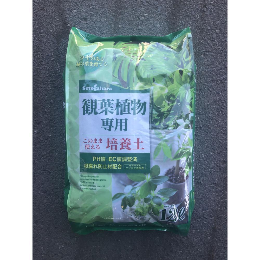 観葉植物専用培養土