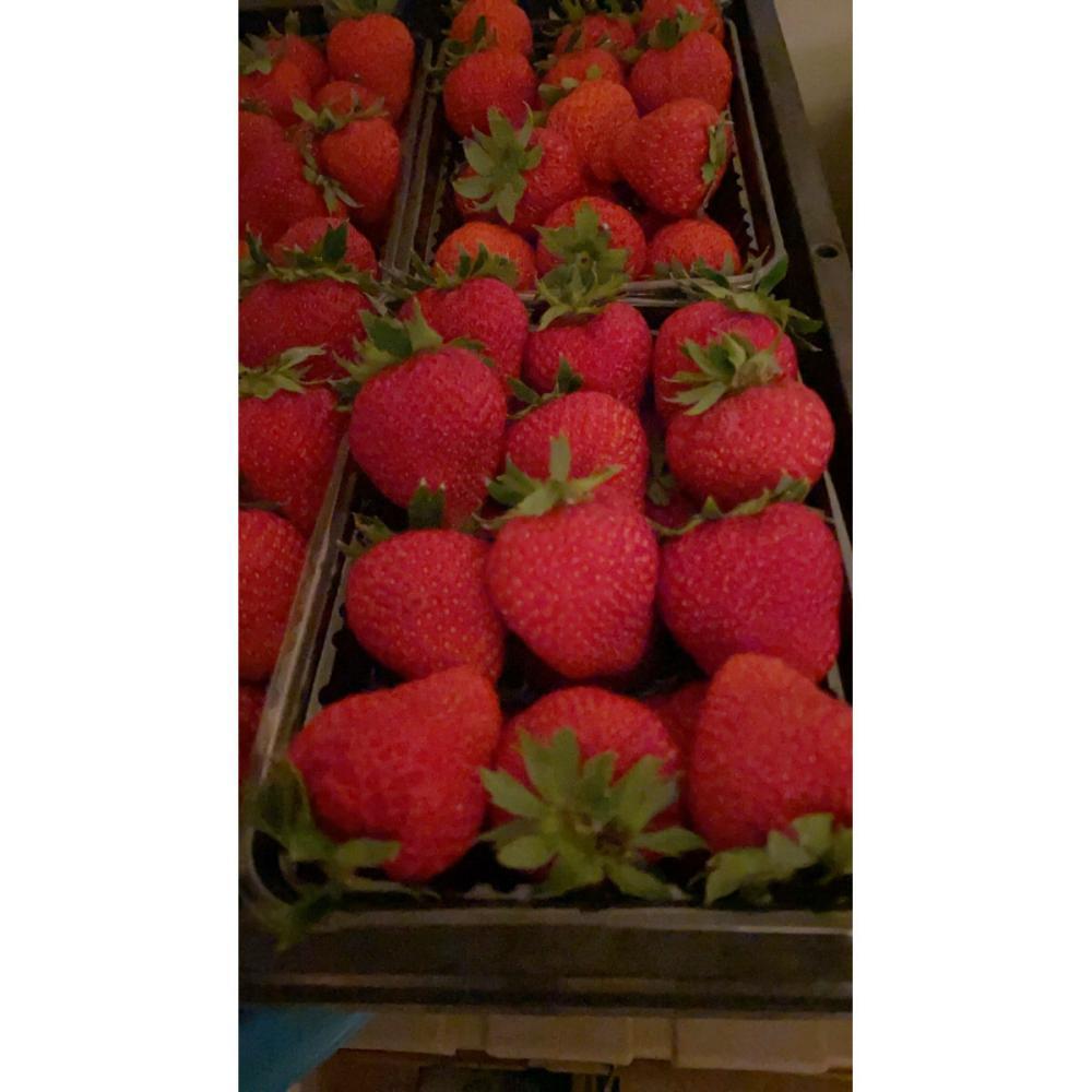 岩手県一戸町産 冷凍夏いちご 約2kg入箱