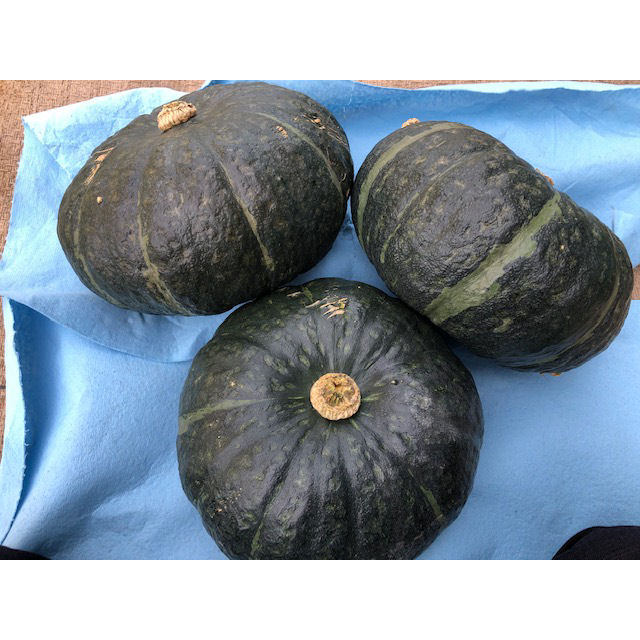 北海道産 かぼちゃ(恋するマロン) L 10kg
