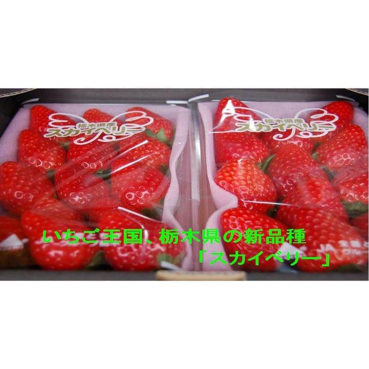 栃木県日光市産スカイベリーDX2パック入箱